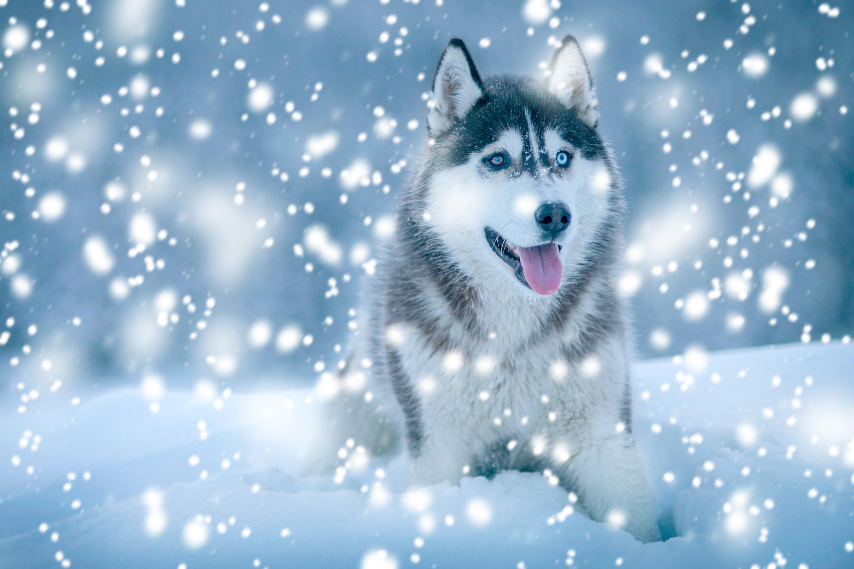 snowtutafter