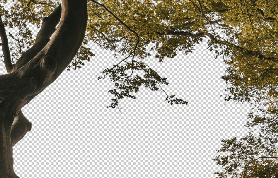 Screen Shot 2020-01-19 at 1.24.12 PM