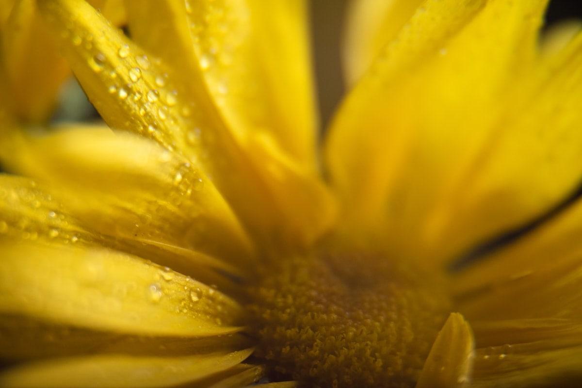 macro photography ideas at home