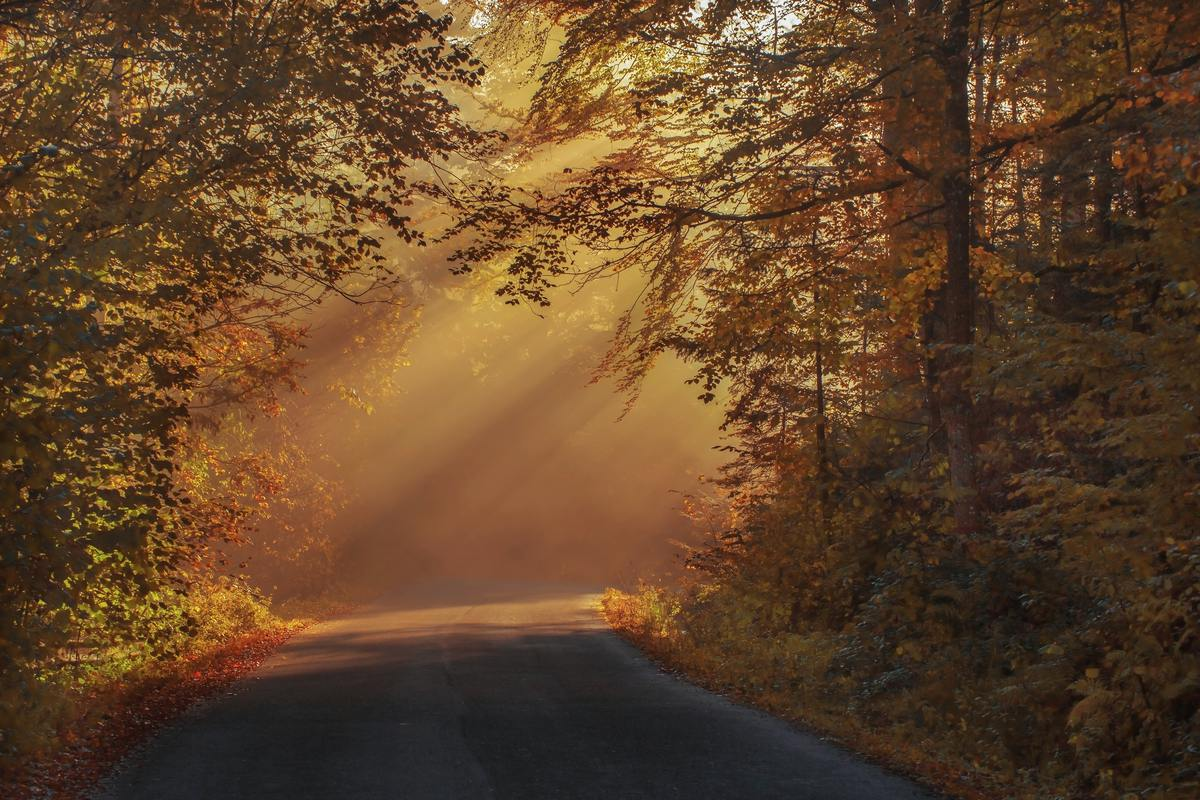 beautiful-sunrays-forest-photography-in-autumn