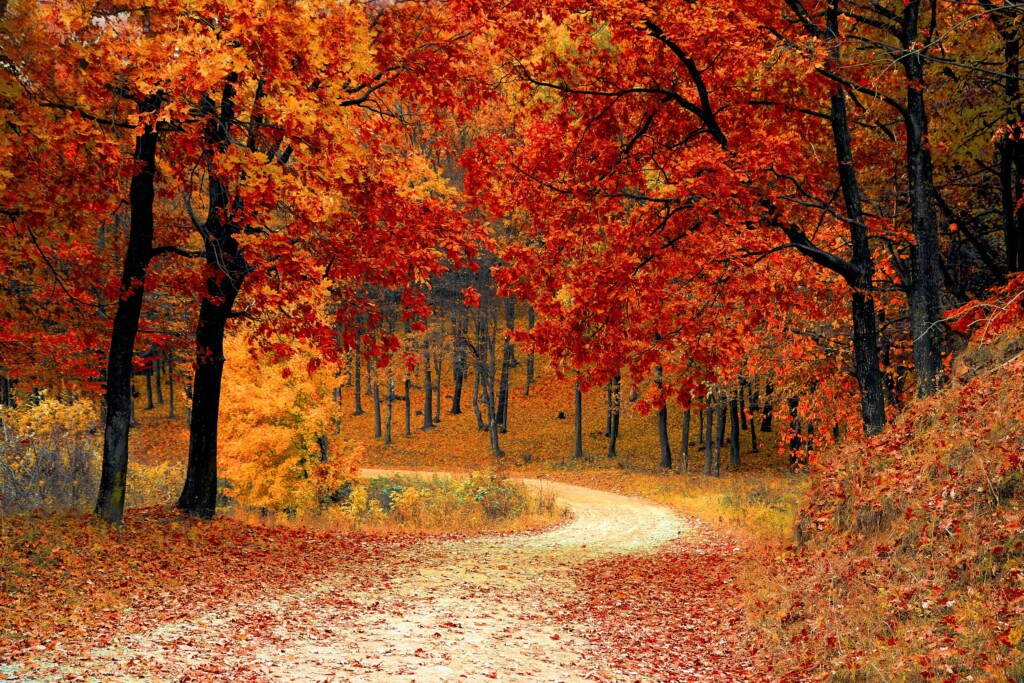 fall-forest-with-colorful-leaves