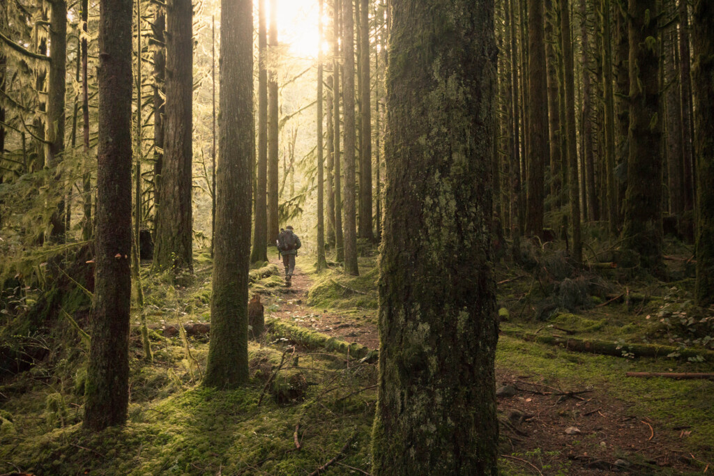 golden-hour-forest-photography