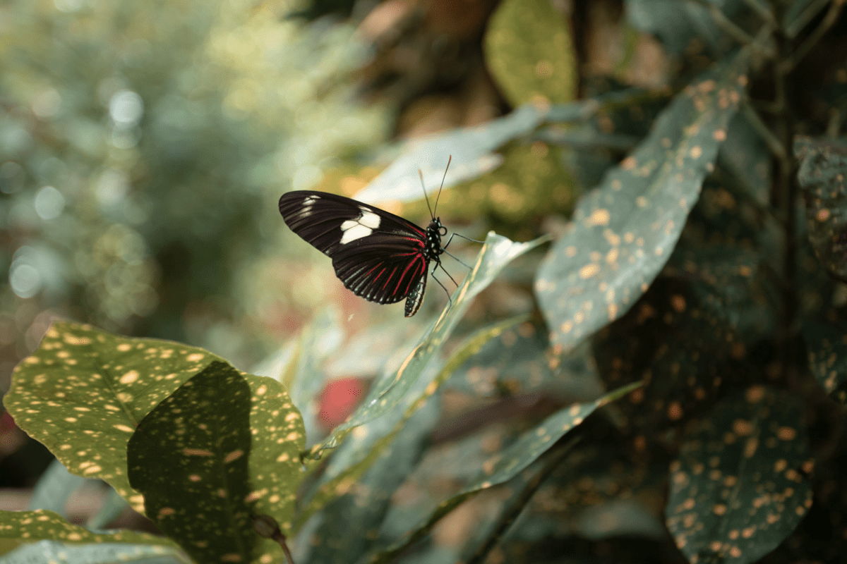 butterfly photo with color adjustments in lightroom