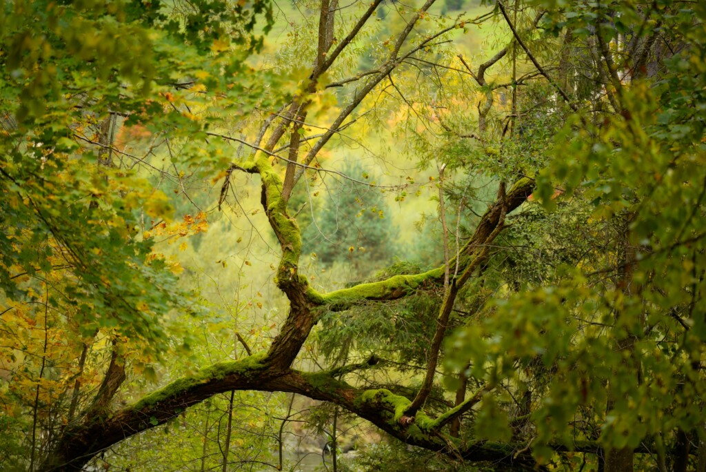 long-lens-forest-photography