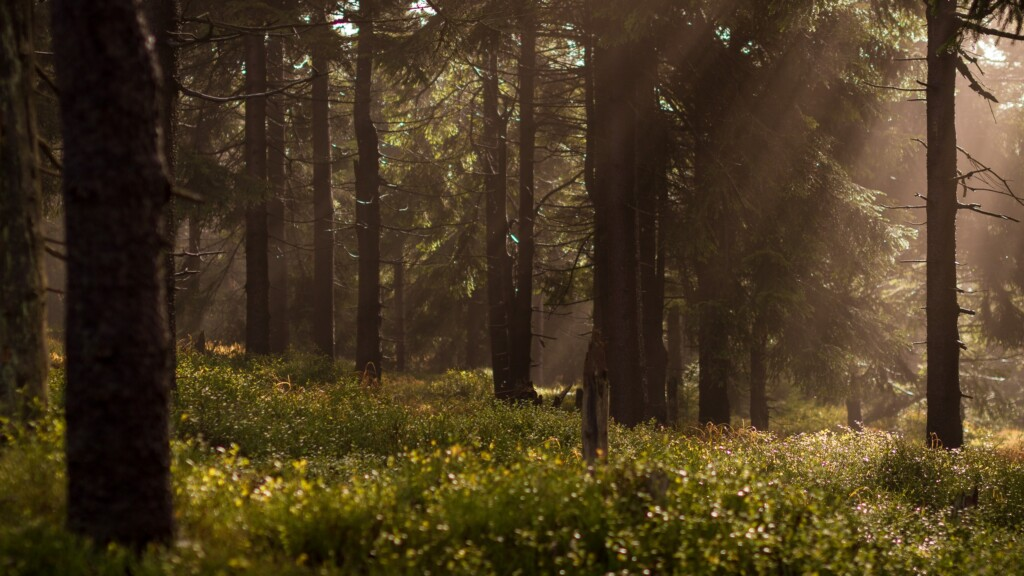 photographing-the-forest-with-sunrays