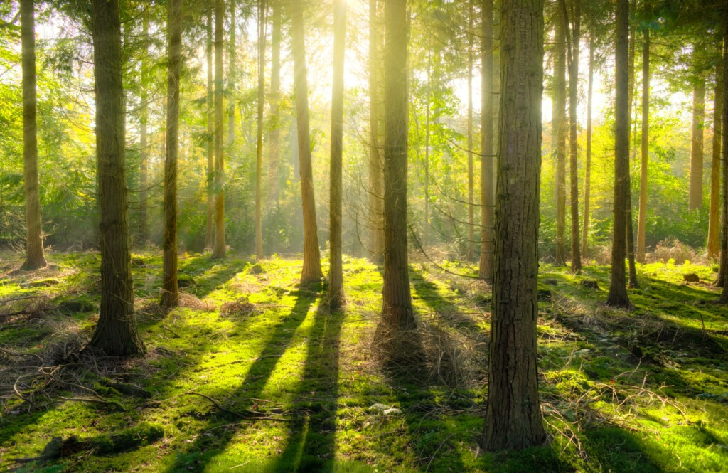 sunny-colourful-forest-photo