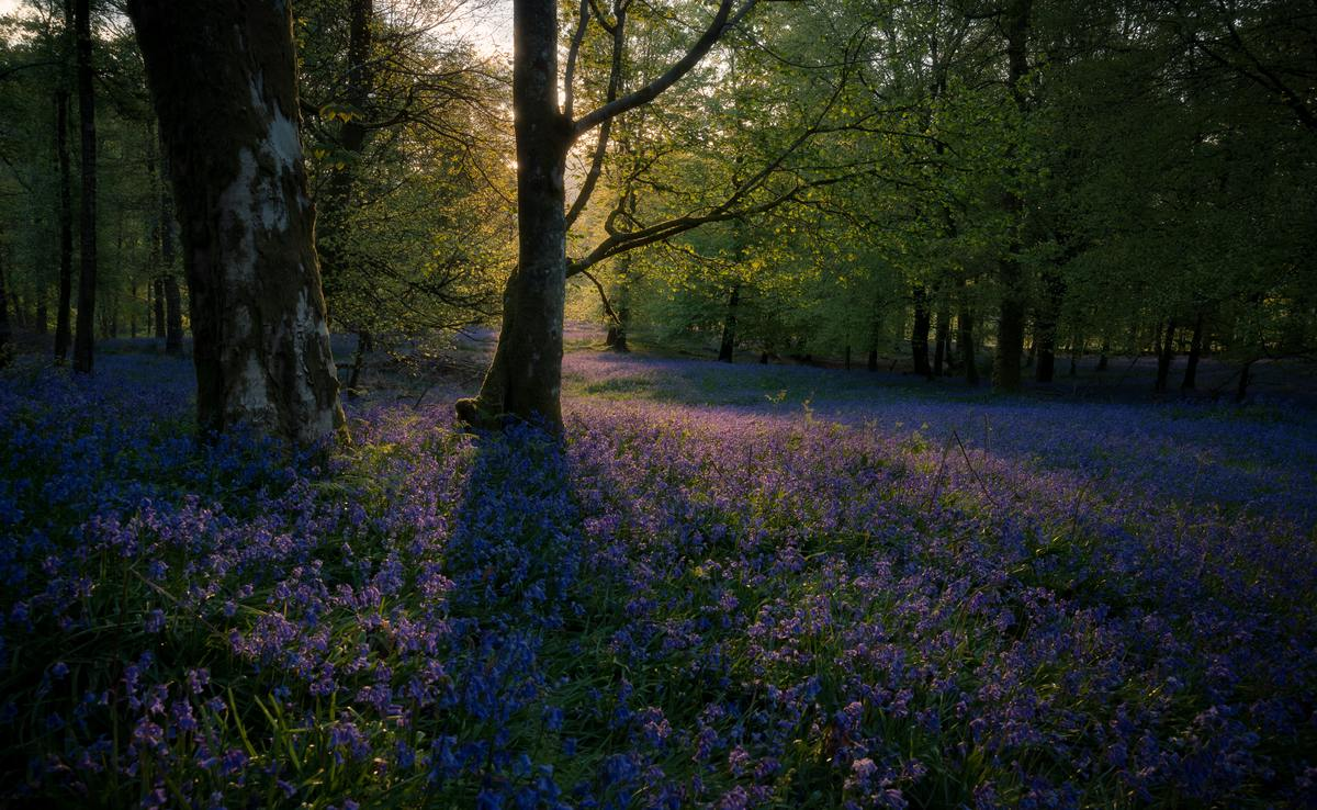 wildflowers-in-forest