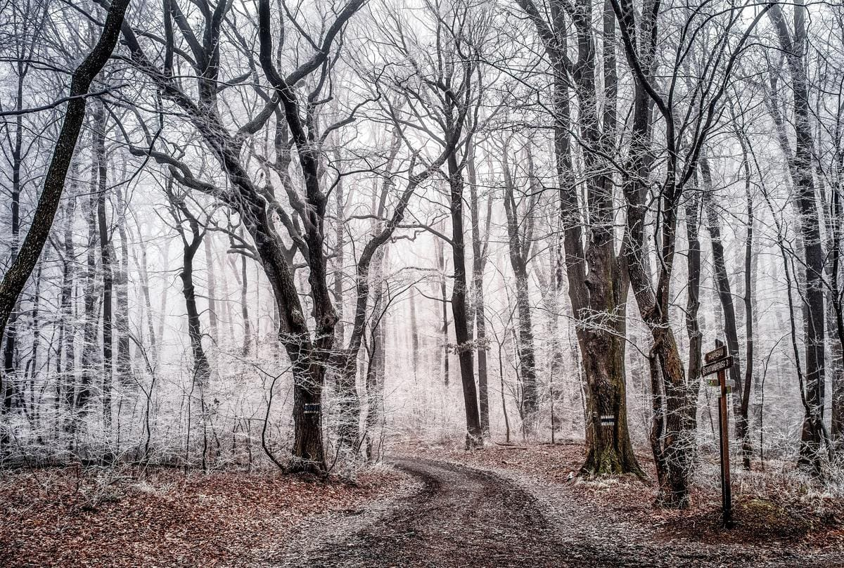 winter-road-forest-photography