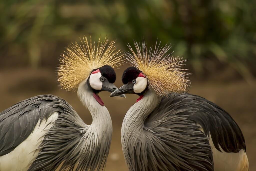 auto-iso-in-wildlife-photography