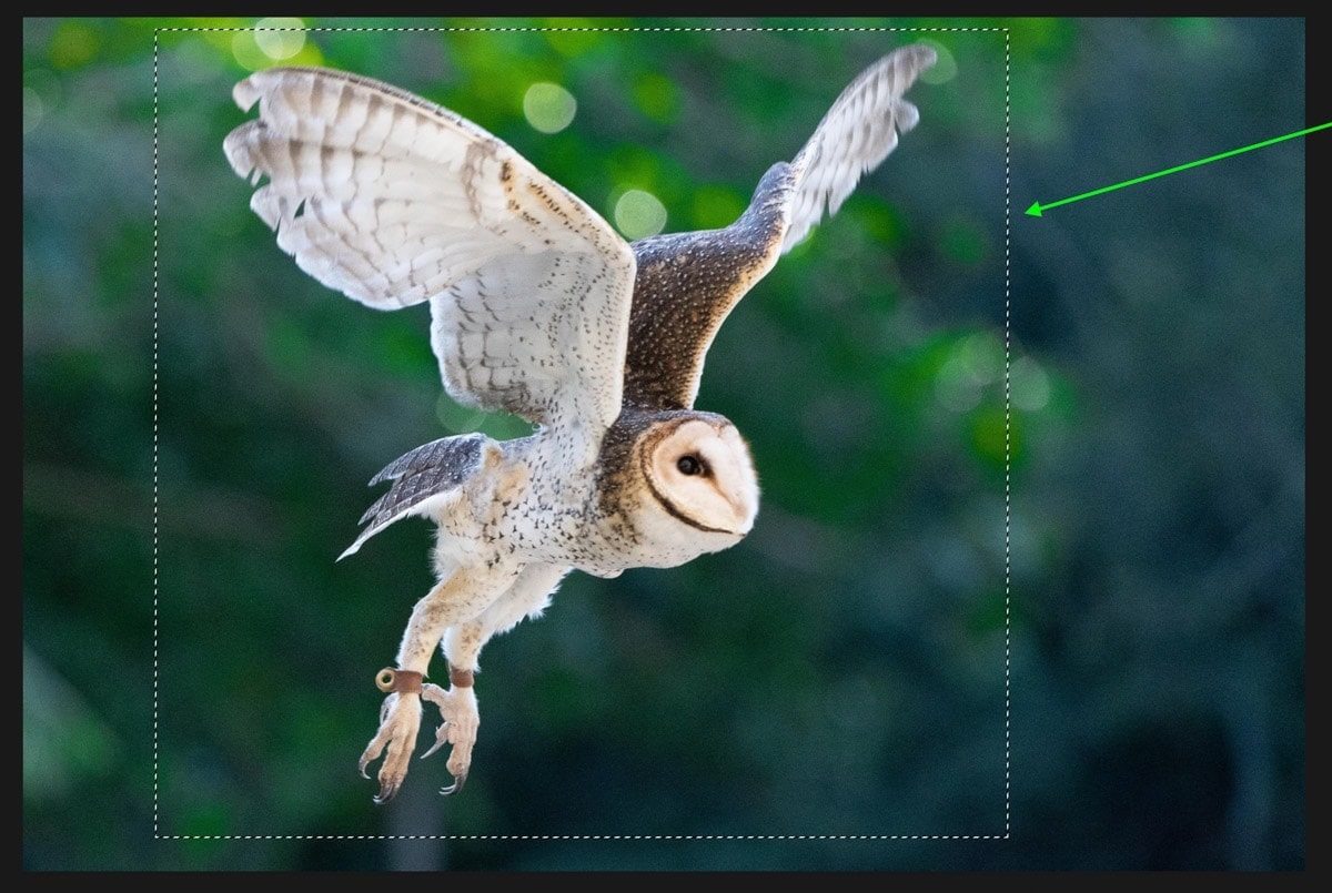 how-to-deselect-in-photoshop